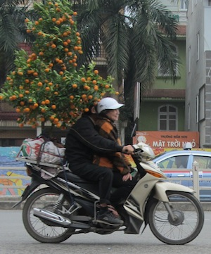 A Hanoi couple bring home their kumquat tree for Tet. The trees are a symbol of good luck.